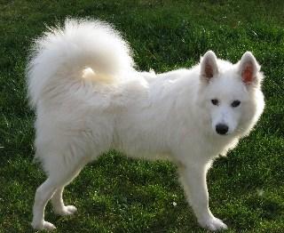 Leif Dog Name