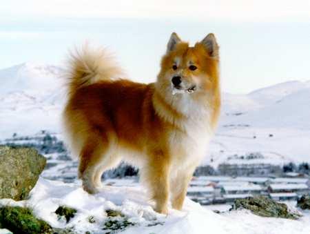 seltene hunderassen vom aussterben bedroht