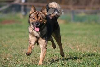 großer oder kleiner hund
